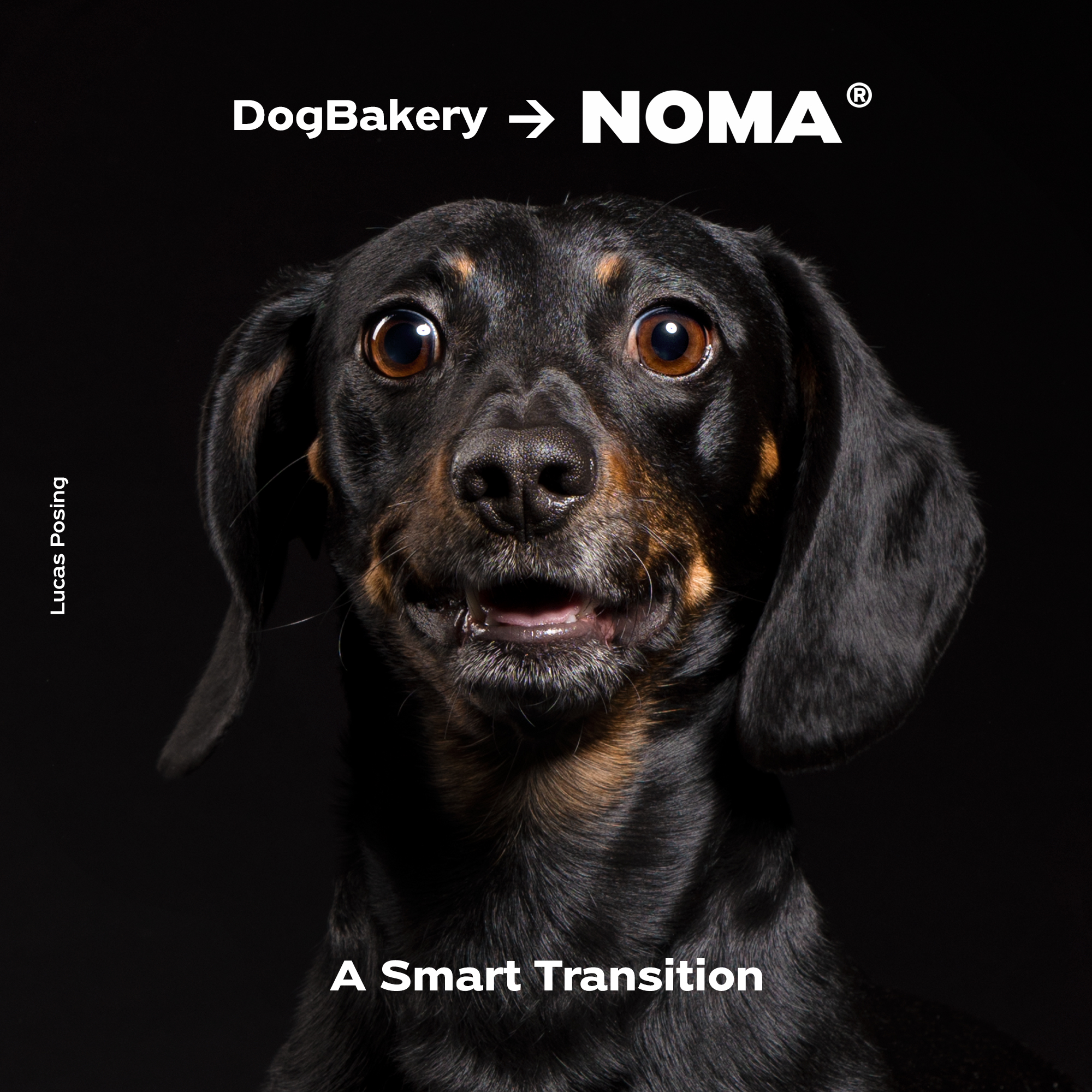 Dog Bakery -> Noma